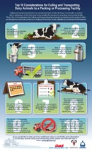"""Top 10 Considerations for Culling and Transporting Dairy Animals to a Packing or Processing Facility"""